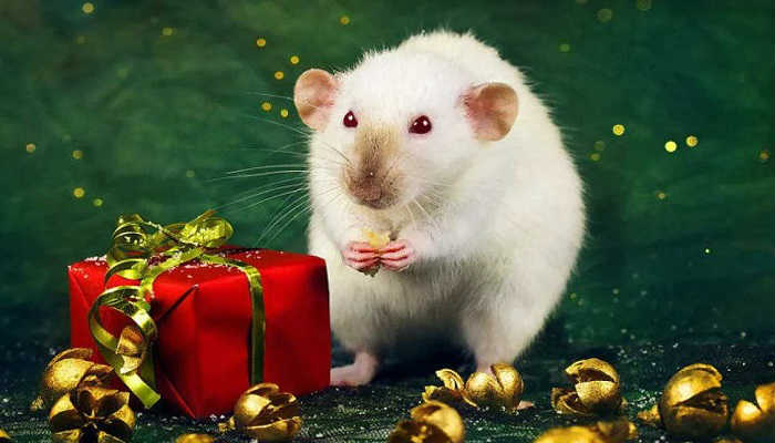 Новый год Крысы